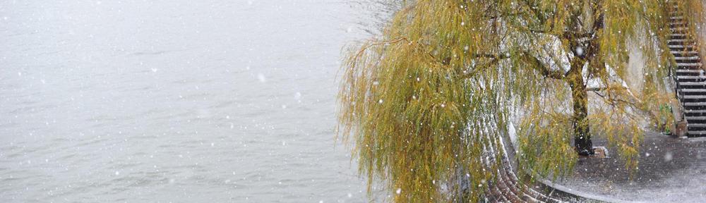 水边树木笔记 v4.0